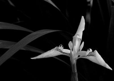 Ardennes, noir et blanc