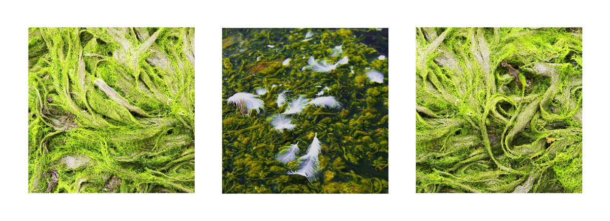triptyque algues2